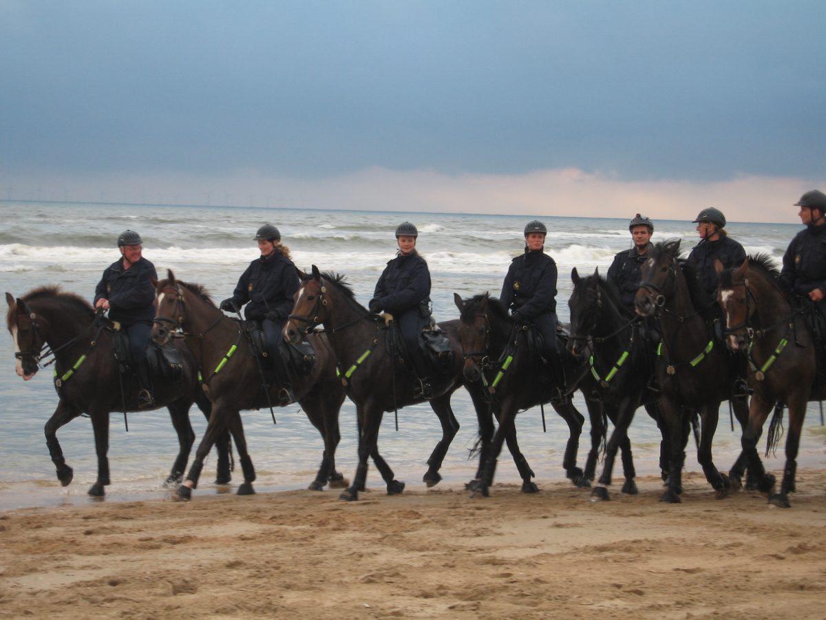 "Realityserie "" Politie te Paard"""